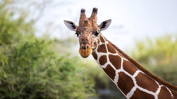 Case Study: Nashville Zoo